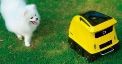 Робот Anthouse позволит удалённо социализироваться с вашей собакой