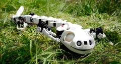 Робот-саламандра Pleurobot передвигается, карабкается и плавает как настоящая
